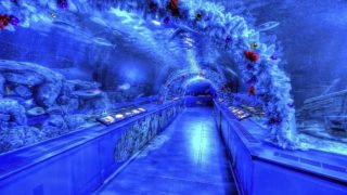 品川の水族館情報
